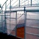 サンシャインファスナーネット 3mX2.4m 0.6mm目 (ビニールハウス ビニール ハウス 部品 トンネル 栽培 資材 家庭菜園 …