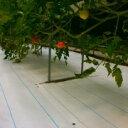 アグリシート シャインホワイト 100cm×100m (家庭菜園 トマト イチゴ 栽培 反射シート 遮光シート 農業用 遮光 シー…