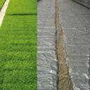 シルバーポリ水稲用 厚さ0.05mm×長さ25m×幅230cm ( 育苗用品 玉ねぎ たまねぎ 栽培 育苗 保温シート 農業資材 保温…