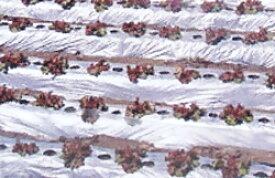 国産オリジナル シルバーマルチ 厚さ0.02mm×幅135cm×長さ200m 3本セット(農業 農業資材 農業用資材 農業用マルチ マルチ 園芸用品 園芸 農業用品 ガーデニング用品 ガーデニンググッズ ガーデニング資材 日本農業システム アイアグリ)