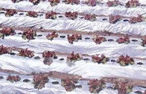 国産オリジナル シルバーマルチ 厚さ0.02mm×幅150cm×長さ200m 3本セット直送品(農業 農業資材 農業用資材 農業用マルチ マルチ 園芸用品 園芸 農業用品 ガーデニング用品 ガーデニンググッズ ガ