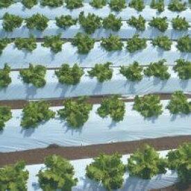 オリジナル白黒ストロングマルチ 厚さ0.025mm 幅95cmX長さ200m×5本セット(農業 農業資材 農業用資材 白黒マルチ 農業用マルチ マルチ 園芸用品 園芸 農業用品 ガーデニング用品 ガーデニンググッズ ガーデニング資材 日本農業システム アイアグリ)