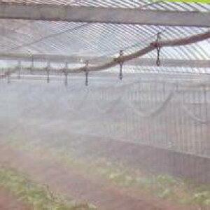 ミストエース20 ハウスクール 04L 100m ( ミスト 水やり 水撒き ビニールハウス ハウス 潅水チューブ チューブ 潅水 散水チューブ 灌水チューブ 散水用品 農業資材 園芸用品 農業用 園芸 ガーデ