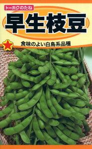 早生枝豆 種子 たね 品番1583