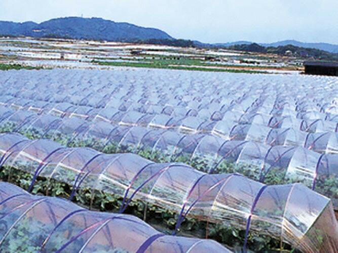農ポリ 厚さ0.05mm×幅180cm×長さ100m 2本セット