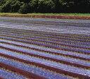 黒ホールマルチ 幅150cm×長さ200m×孔60mm 規格5330 3本セット(穴あきマルチ 穴 黒 マルチシート 農業用マルチ 防…