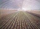 ミストエース S54 100m ( ミスト 水やり 水撒き ビニールハウス ハウス 潅水チューブ チューブ 潅水 散水チューブ 灌…