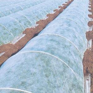 パオパオ90べたがけ 長さ50m×幅150cm 保温用資材 不織布 霜よけ 虫よけ(防虫シート トンネル 農業用 畑 防虫カバー 虫除け 保温シート 農業用不織布 園芸 野菜 霜除け 霜対策 アイアグリ 日本農