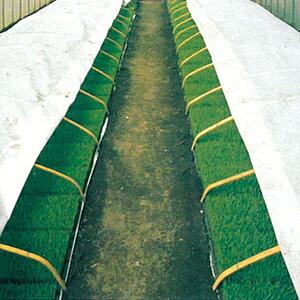 ラブシート20307白 厚さ0.13mm×長さ50m×幅135cm ( トンネル栽培 不織布 農業用不織布 トンネル用 保温シート 農業資材 保温資材 農業用資材 園芸用資材 園芸資材 ガーデニング ガーデン用品 農作