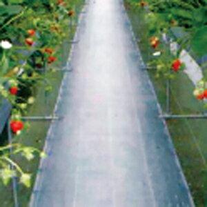 ダイオグランドシート抗菌剤入 黒 長さ100m×幅150cm 遮光性が高く、防草効果抜群の防草シートです。(防草シート 雑草シート 庭 雑草対策 農業資材 草防止シート 園芸用品 農業用 道具 ガーデ