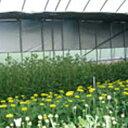 シルバーポリ保温用 長さ100m×厚さ0.05mm×幅180cm ( ビニールハウス ビニルハウス ハウス栽培 トンネル用 トンネル…