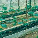 キュウリネット 白緑 18cm目×幅180cm×長さ50m(きゅうりネット 野菜ネット 野菜網 網 防虫 虫除け 虫よけ 虫除けネッ…