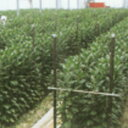 タキロン 打込新杭 グイット 径31.8mm×長さ180cm 10本 ( 道具 ガーデニング用品 農業用資材 野菜づくり トンネル栽培…