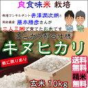 Fuzimoto_kn10
