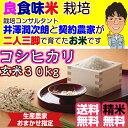 Kosihikari_30_3