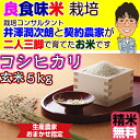 Kosihikari_5_3