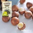 手で割れる殻付きマカダミアナッツ(125g/オーストラリア産/ロースト) 素焼き 無添加 おつまみ オレイン酸 パルミト…