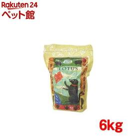 ロータス アダルト ラムレシピ 中粒(6kg)【ロータス】[ドッグフード][爽快ペットストア]
