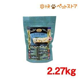 グレインフリーフィッシュレシピ 小粒(2.27kg)[爽快ペットストア]