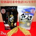 令和2年産新米☆極上味わいお試しセット☆特別栽培米中魚沼産コシヒカリ2kg