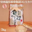 令和元年産☆特別栽培米中魚沼産コシヒカリ5kg(富井さん)