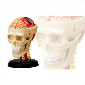 立体パズル 4D,VISION 人体解剖 頭解剖モデル