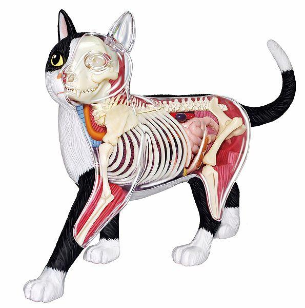 【1月再入荷予定】立体パズル 4D VISION 動物解剖 猫 解剖モデル 黒/白