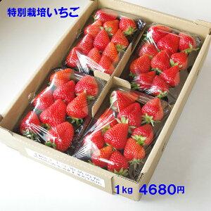 無化学肥料・減農薬いちご 身内へのギフト・贈答、うち使い用 1箱1kg(250g×4パック) ゆめのか 愛知県産 フルーツ 【送料無料】
