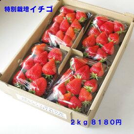 無化学肥料・減農薬いちご 身内へのギフト・贈答、うち使い用 2kg(250g×8パック) ゆめのか 愛知県産 フルーツ 【送料無料】