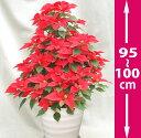 鉢植ポインセチア 9号・赤、1mのタワー型◆お歳暮、クリスマスギフト、お祝い、プレゼント用にギフト仕様でお届けしま…