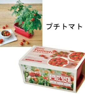 エンジョイプランター ベジ&フラワー 02ミニトマト【栽培セット】