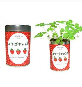 【栽培セット】 リトルガーデン イチゴチャン