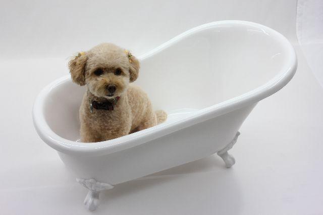 ペット用バスタブ ペットバス 犬 バスタブ 小型 猫足バスタブ 浴槽 猫脚バスタブ 幅750 人工大理石製 浴槽 バスタブ 浴そう お風呂 置き型 ペット用品 犬用品 猫足バスタブ KOA-B109W(白)