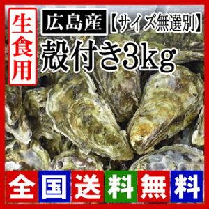 【期間限定】生牡蠣 生食用 殻付き牡蠣3kg  広島牡蠣(サイズ無選別)[お取り寄せ] 牡蠣の大きさは大小様々です。[産地直送] 活きたままお届け致します!