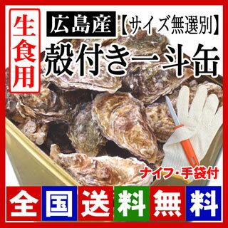 生牡蠣 生食用 殻付き牡蠣 一斗缶(約100個)[サイズ無選別] 牡蠣の大きさは大小様々です。【ナイフ・手袋付】/牡蠣 殻付き/牡蠣 生食 ※商品のお届けは12月30日(日)までとなっております。