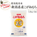 新米 令和2年産 特別栽培米〔もち米〕新潟産こがねもち1.5kg