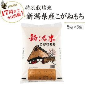 令和2年産 特別栽培米〔もち米〕新潟産こがねもち5kg×3袋【送料無料】(一部地域を除く)