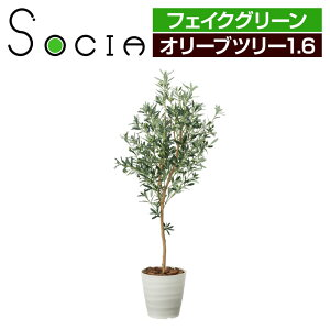 SOCIA オリーブツリー1.6 フェイクグリーン 観葉植物 日本製 光触媒加工 V-CAT採用 抗菌 消臭 防汚 ホルムアルデヒド分解 幅550×奥行550×高さ1600mm / G-OVT16