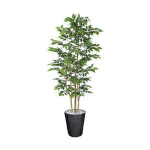 ケヤキ 高さ180cm 観葉植物 インテリア 開店祝い 引越し祝い 手入れ不要 OA PLANTS