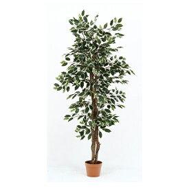 イミテーショングリーン 観葉植物 フィカス 幅800 奥行800 高さ1600mm グリーン 不二貿易 観葉植物 植物 観葉 人工 インテリア 鉢 おしゃれ FB-52663