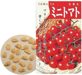野菜の種 ミニトマト 苗床付