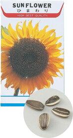 花の種 ヒマワリ 苗床付