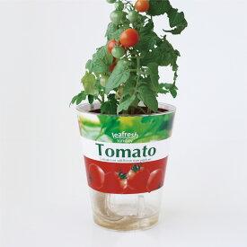 △フレッシュベジ ミニトマト