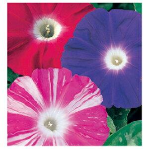 花の種 ひまわり 907-541【サカタのタネ】