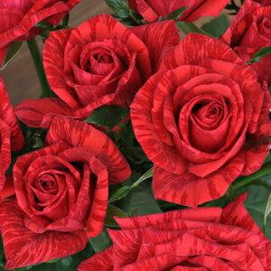 レッド・インテューション(大苗予約)7号鉢植え デルバール(Delbard) フレンチローズ 四季咲き バラ苗