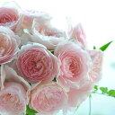 みさき(大苗)7号鉢植え 四季咲き中輪房咲き系 F&Gローズ フローリスト&ガーデナーズローズ
