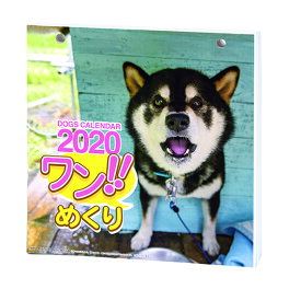 2020年 カレンダー 犬 ワン!!めくり リフィル 替え用です 1000109226