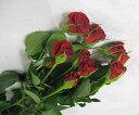 SPミニバラレッド(S/Rキャンディ(Rなど5本 切花 生け花 花材 ドライフラワーに最適