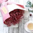 かすみ草 カスミソウ 花束 花 誕生日 結婚祝い お礼 花束 赤いかすみ草 チェリー レッド 生花ドライフラワーにも 誕生日 ギフト 送料無料 ホワイトデー 愛妻の日