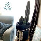 送料無料プレゼント観葉植物柱サボテン8寸インテリアサボテン多肉植物観葉開店祝い送料無料